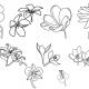 11-flower