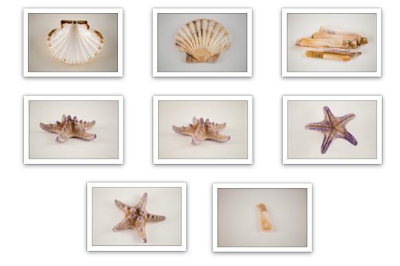 19-isolated-sea-shels